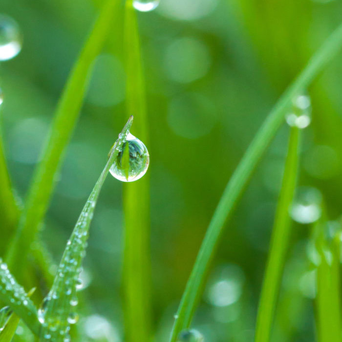 FLOW-Wheatgrass-Water-Drop-square