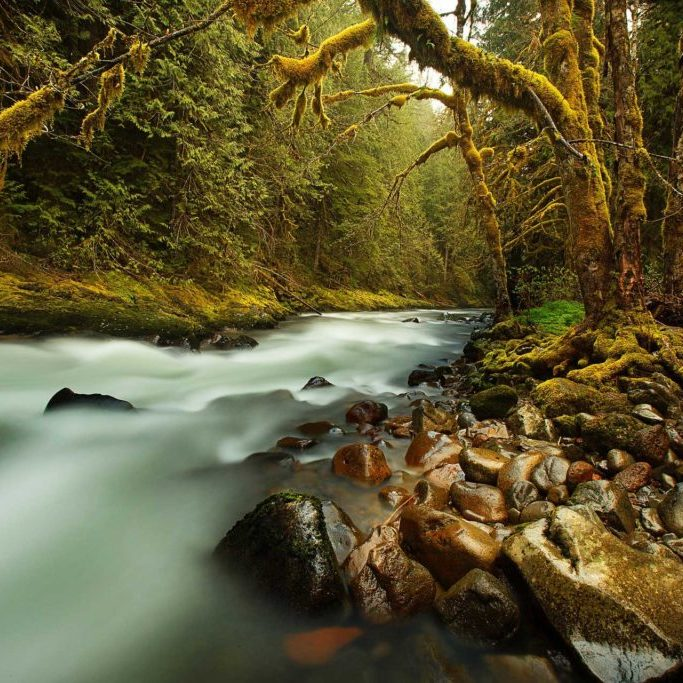 Creek, Trees and Rocks